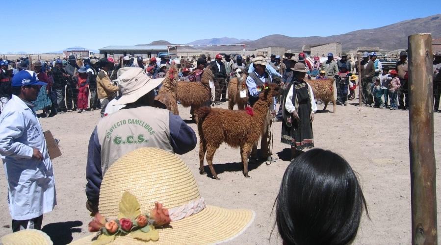Pérou & Bolivie - Les Andes à vélo