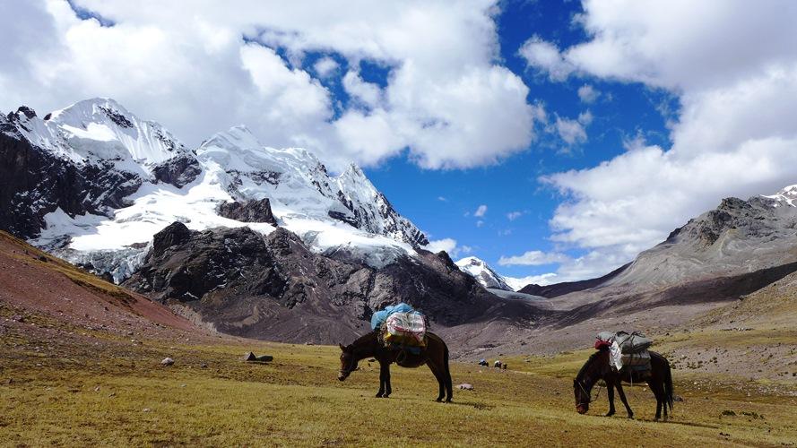 Les mules au pied des glaciers